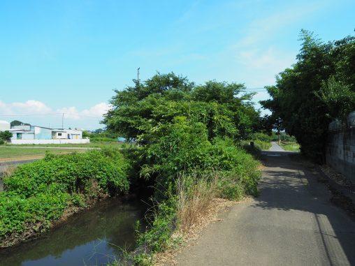 海老川沿いの風景