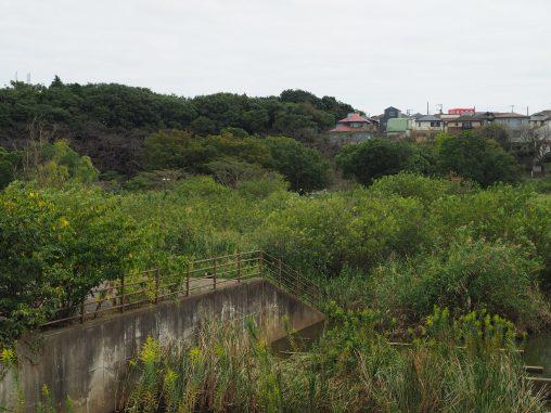 長津川親水公園2021.9.27